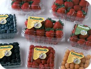driscollsberries.jpg